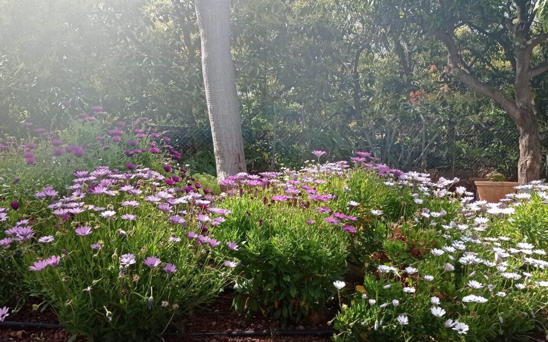 ¿Está tu jardín o terraza preparada para el verano?