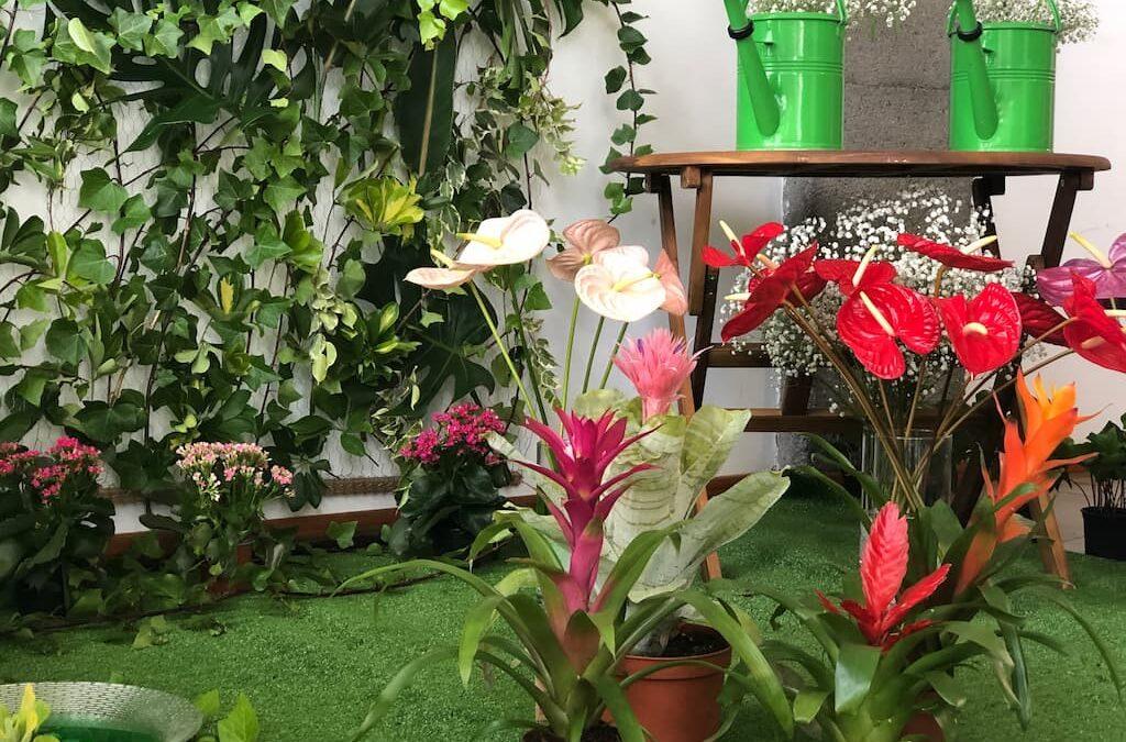 Atractiva exposición floral del alumnado de Actividades de Floristería del CRNJ Los Realejos